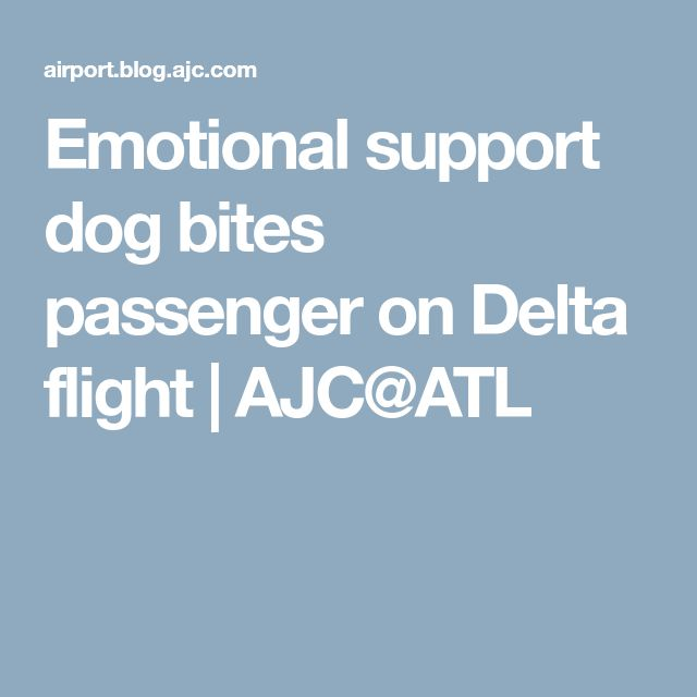 Emotional support dog bites passenger on Delta flight | AJC@ATL