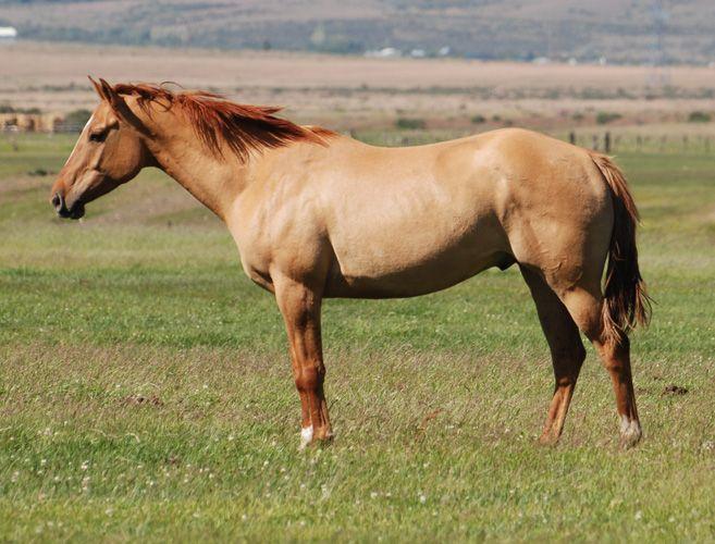 289 best Horses/Buckskin/Dun/Grullo images on Pinterest ...