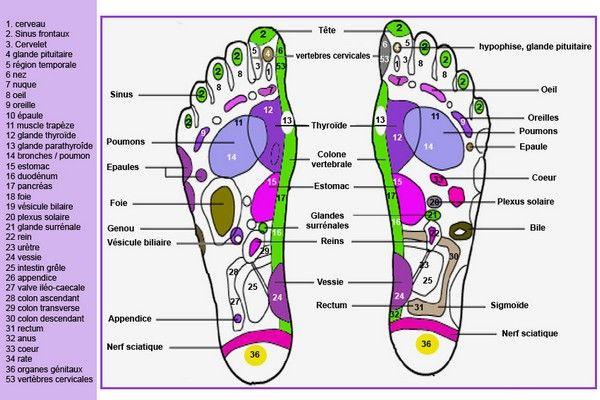 """Pour partir du bon pied voici une infographie représentant les différents points d'acupressure. L' acupressure est une technique de pression et de massage qui stimule certains points situés le long des """"méridiens"""" qui parcourent tout le corps"""
