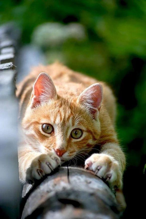 Tabby cat - heat seeking missile locked  on target