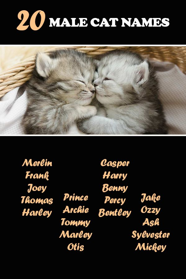 100 Terrific Cat Names That Start With T Catvills In 2020 Cat Names Cute Cat Names Kitten Names Boy