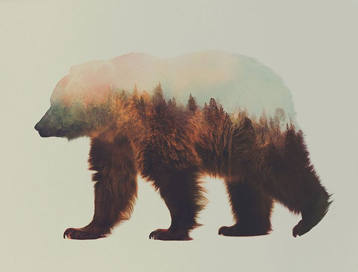 Double exposure bear by Andreas Lie, a visual artist based in Bergen Norway