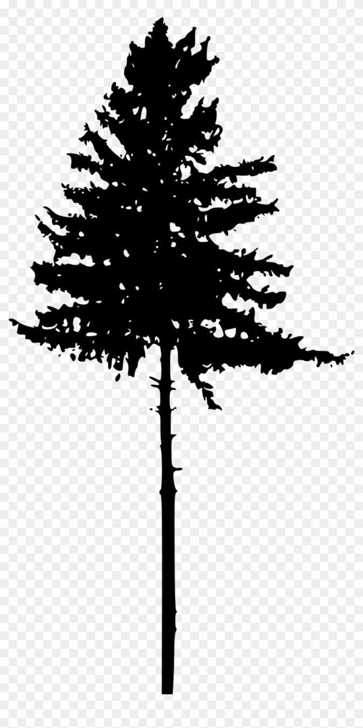 Tree Silhouettes Png Transparent Background Pine Tree Silhouette Png Background Pine Png Silhouette Sil Pine Tree Silhouette Tree Silhouette Silhouette Png