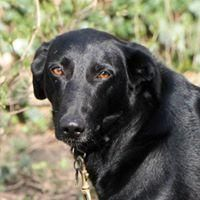 Sophie, needs a special home is an adoptable german shorthaired pointer searching for a forever family near Lucknow, ON. Use Petfinder to find adoptable pets in your area.