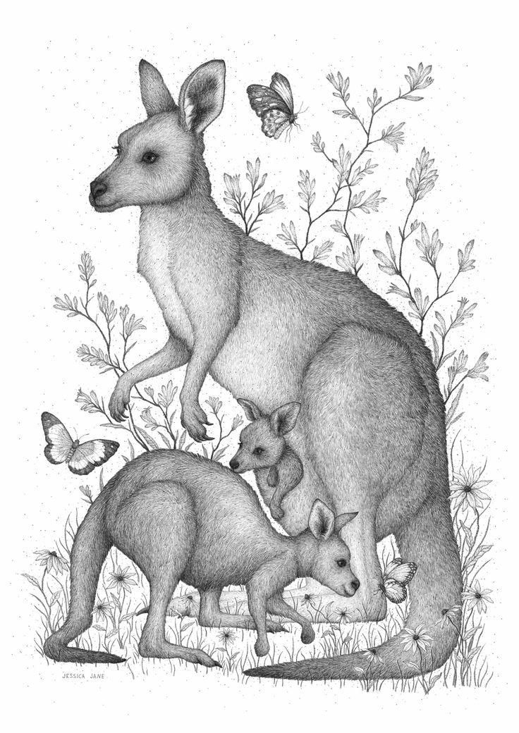 Kanga and roos — Jessica Jane Illustration Illustration