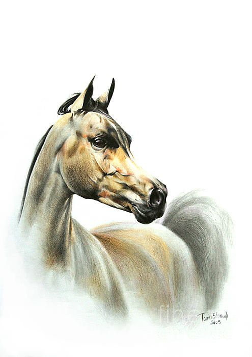 the arabian horse essay The arabian horse is a breed of horse with a reputation for intelligence, high spirit , and outstanding stamina with a distinctively chiseled head and high tail.