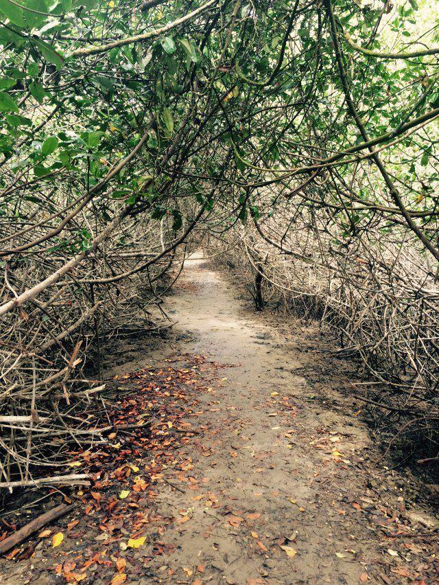 Adentro de los manglares.