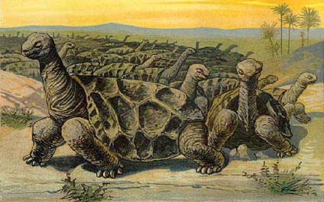 Dinosaurs Weren't The Only Reptiles to Go Extinct: Recently Extinct Reptile #5 - The Rodrigues Giant Tortoise