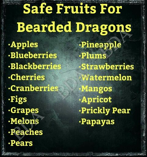 ♥ Cool Pet Care ♥ Safe fruits for bearded dragons