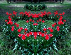 shaped flower beds - Google Search