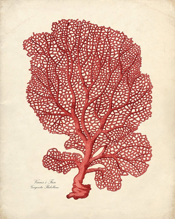 Sea fan print adapted from a vintage illustration. From Vintage by the Shore on Etsy.