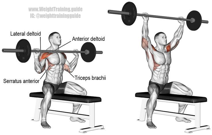 Seated barbell overhead press. A compound push exercise. Main muscles worked: Anterior Deltoid, Lateral Deltoid, Triceps Brachii, Supraspinatus, Middle and Lower Trapezii, and Serratus Anterior. Also known as the seated barbell shoulder press.