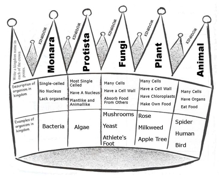 Kingdoms of Life Notes-Make into a pictorial input, but split into 6 kingdoms