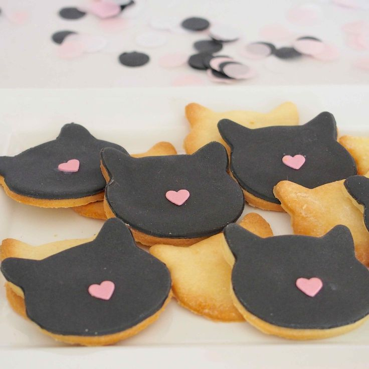 biscuits chat