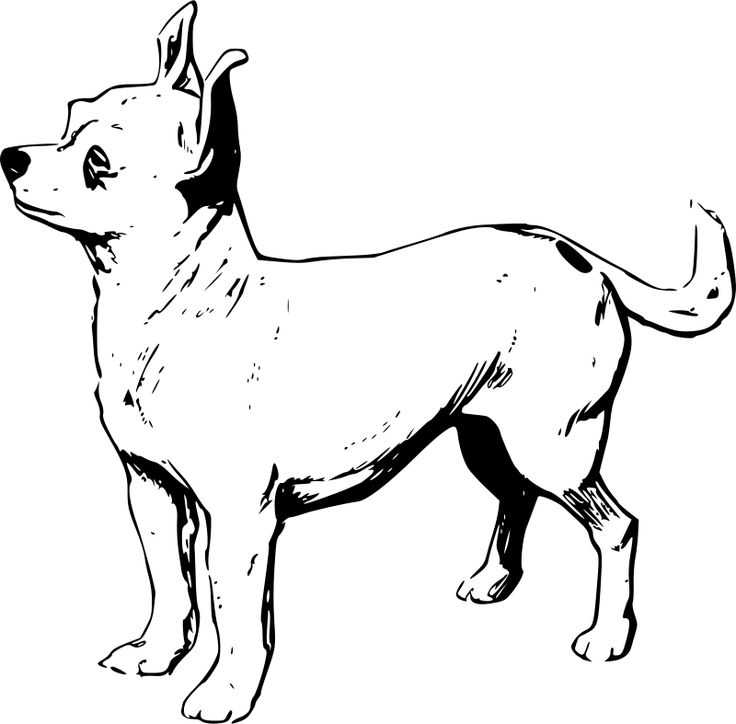 chihuahua dog clipart - photo #29