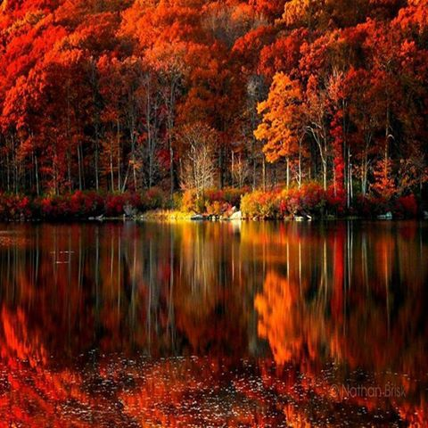 Autumn Reflections ♡*Thank You For Following Me!*♡ No pin limits for followers. My pins are your pins. Feel free to repin whatever you want and as much as you want. Please visit often and pin freely anytime.❤️ GOD BLESS YOU! Please Visit me at → https://www.pinterest.com/imjollyollie/
