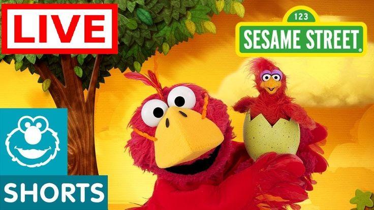 Elmo's World Full Episodes LIVE 24/24 - Sesame Street - YouTube