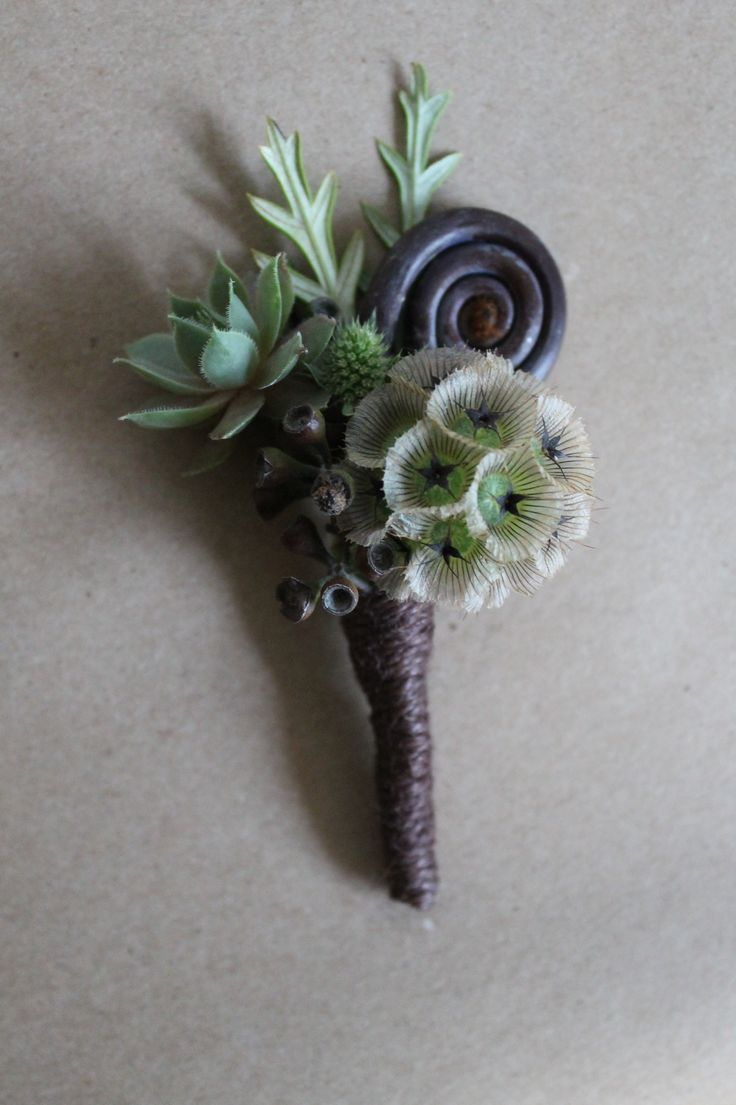 Boutonniere made with scabiosa pod, succulent and fern curl