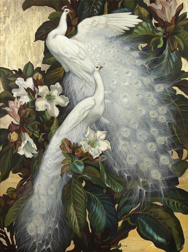 Магазине, картинки с райскими птицами
