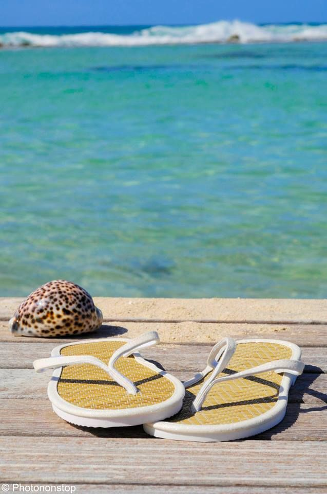 Bord de Mer, bien-être et coquillage en Méditerranée