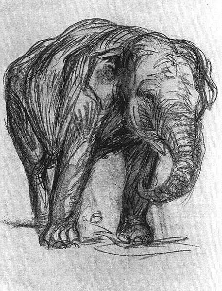 Contour Line Drawing Elephant : Elephant franz marc pencil drawing