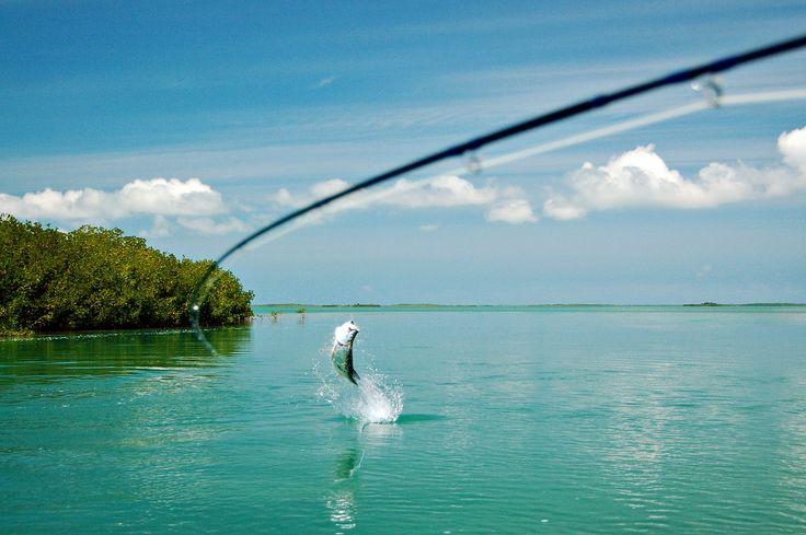 I del 12 av Asgeirs fiskeskole lærer Asgeir Alvestad deg hvordan du fisker med flue i tropiske strøk.