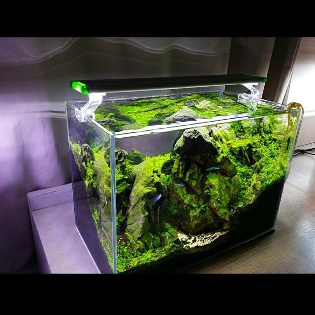 A nice smart aquascape tank pinterest nice and amazons for Smart fish tank