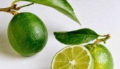 Cara Cepat Menguruskan Badan Dengan Jeruk Nipis - http://caralangsing.net/cara-menguruskan-badan/cara-cepat-menguruskan-badan-dengan-jeruk-nipis/