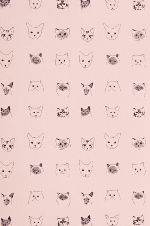 You can never go wrong with cats on a wallpaper