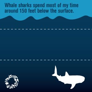 DYK: Whale sharks spend most of their time around 150 feet below the surface? Ocean Conservancy:  http://www.oceanconservancy.org/places/gulf-of-mexico/Gulf-Wildlife-fact-sheets/whale-shark.html