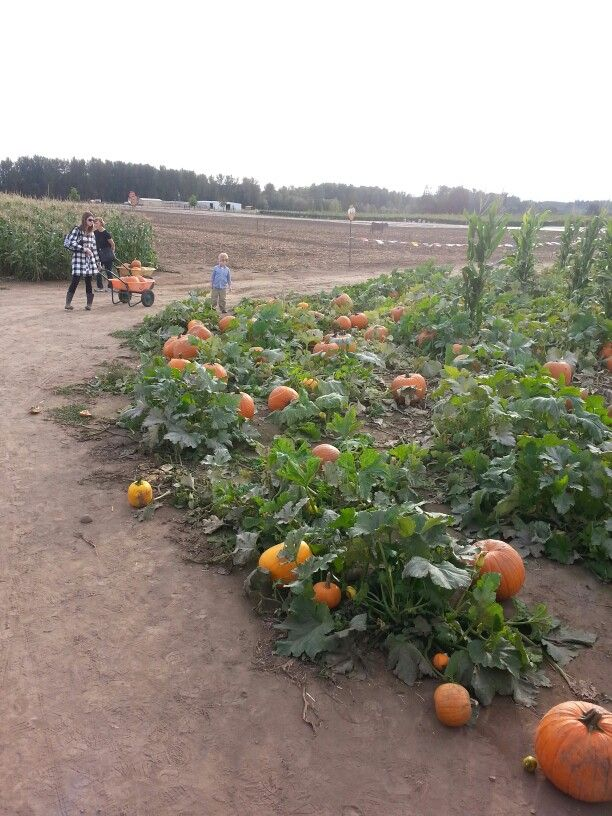 Pumpkin patch stayton oregon