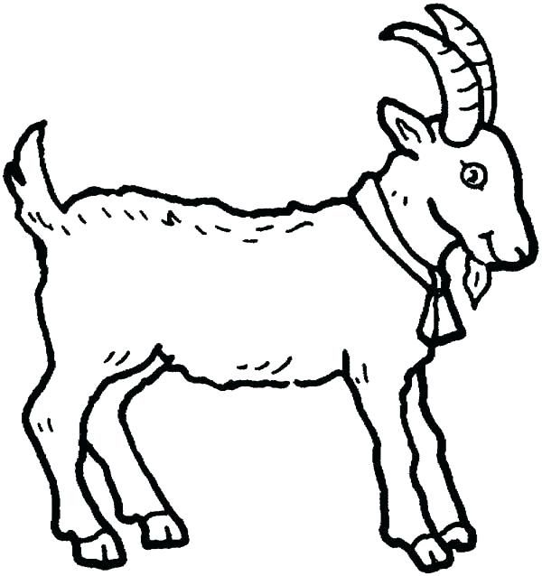 Baby Animal Coloring Pages - Best Coloring Pages For Kids Farm Animal Coloring  Pages, Animal Coloring Pages, Animal Outline