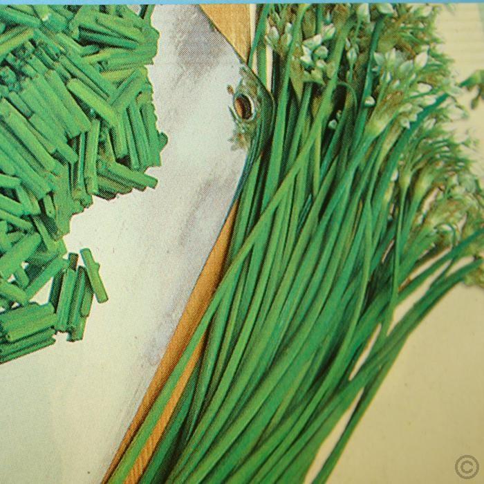 Schnitt Knoblauch - 1 samentüte günstig online kaufen, bestellen Sie schnell und bequem online  Garlic Chives