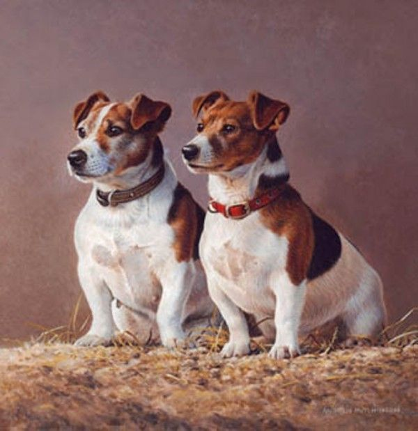 """Double Trouble"" Jack Russells in acrylic by Andrew Hutchinson, Yorkshire-born artist & naturalist, b.1961"