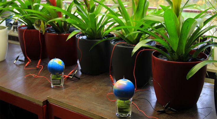 Bitkilerden Enerji Üretimi  - http://morfikirler.com/yazi/bitkilerden-enerji-uretimi