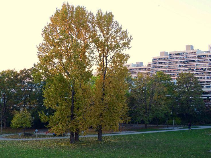 October trees
