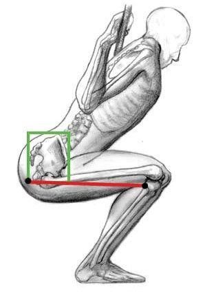 Squatting with a forward trunk lean increases hamstring activation and protects your knees - especially great for ACL injuries!