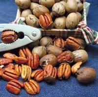 Starking ® Southern Giant Pecan - Pecan Trees - Stark Bro's: Pecan Produces, Starking Southern, Pecan Trees, Pecans, Products, Giant Pecan, Flavorful Nuts
