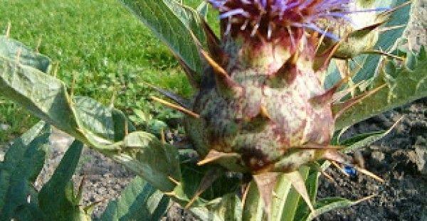 Χόρτα στη φύση – Αυτό το άρθρο να το εκτυπώσετε!!!! - http://biologikaorganikaproionta.com/health/197250/