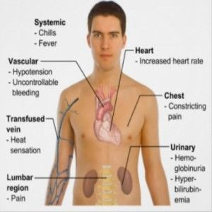 Herbal Remedies For Hemolytic Anemia