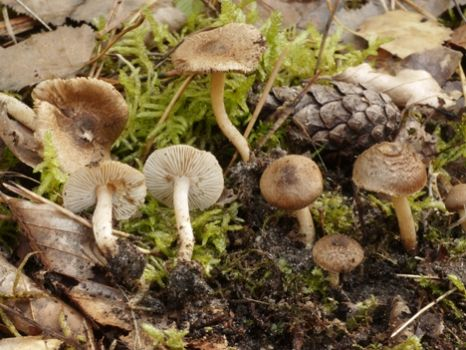 mushrooms and fungi a hamlyn colour guide