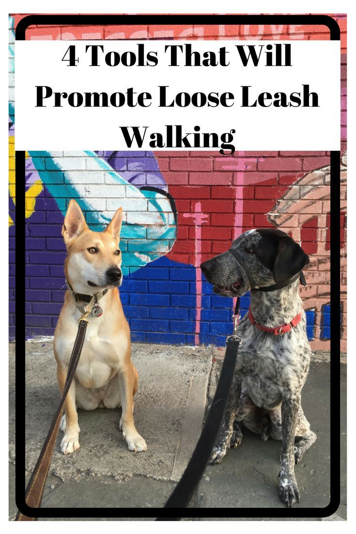 How To Get Your Dog To Stop Pulling And Walk With A Loose Leash