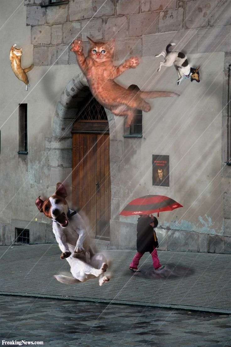 What Literary Device Is Raining Cats And Dogs