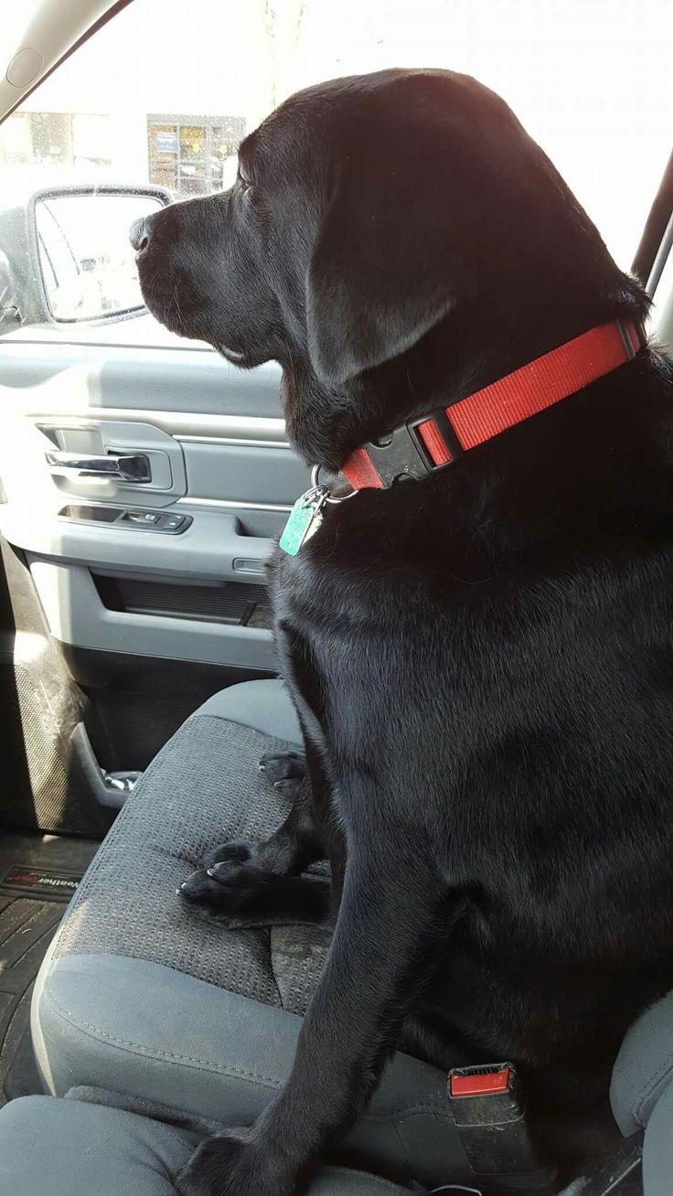Labrador                                                                                                                                                                                 More