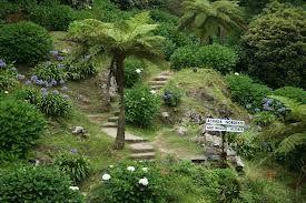 Ribeira dos Caldeirões Natural Park, Açores.