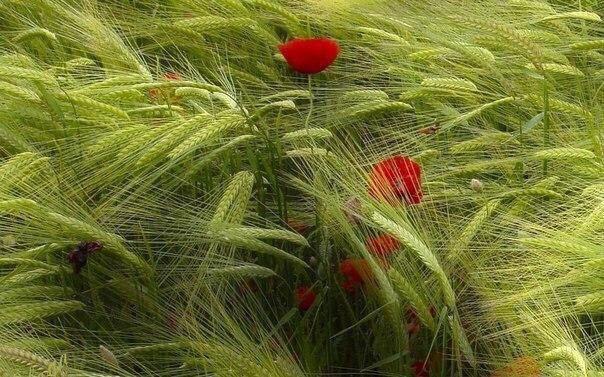 У каждого своя скорость жизни. Надо уметь дать себе время, не бежать впопыхах и беречь свой внутренний сад.