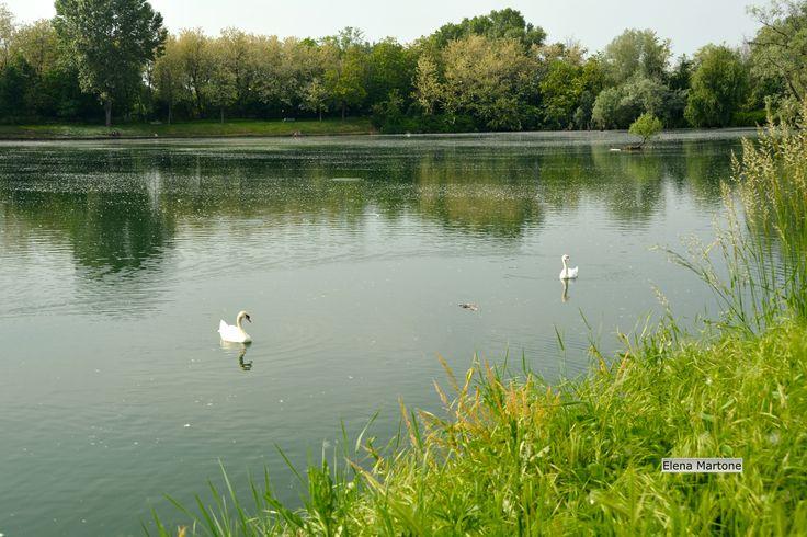 Vita nel lago