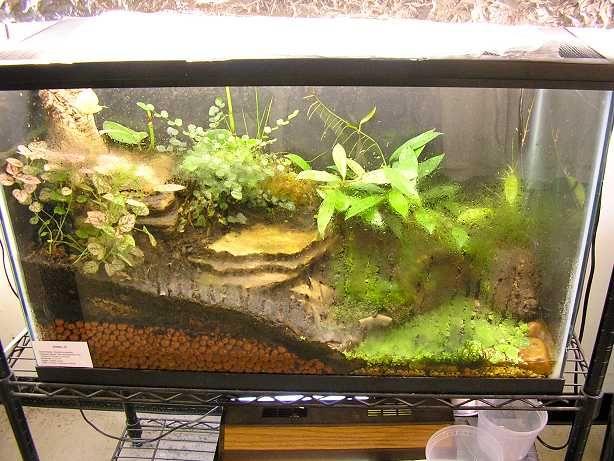 Fishtank terrarium