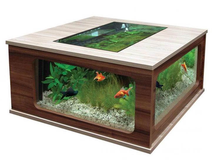 Beautiful Coffee Table Aquariums