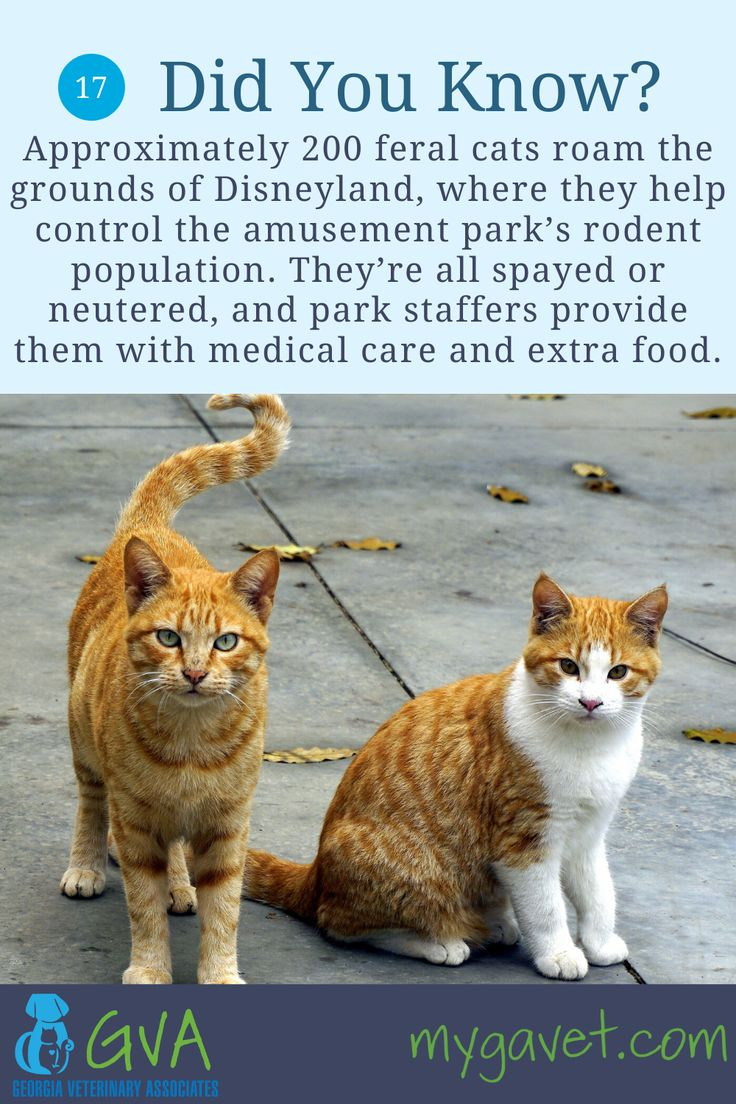 Cat Fact 17 in 2020 Cat facts, Animal facts, Feral cats
